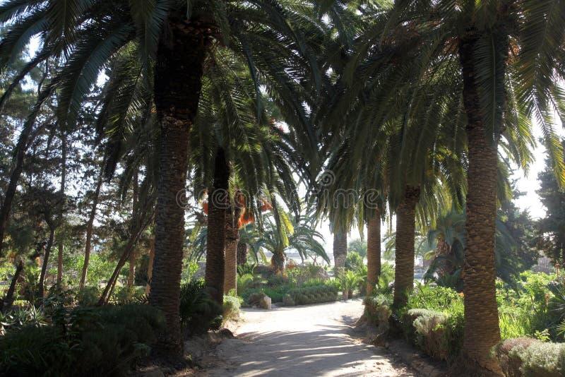 Palma jardim-Carthage, Tunísia imagens de stock