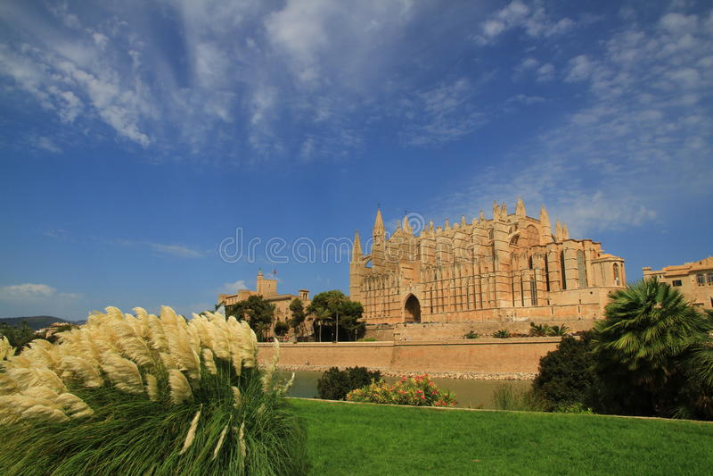 Palma Katedra obraz royalty free