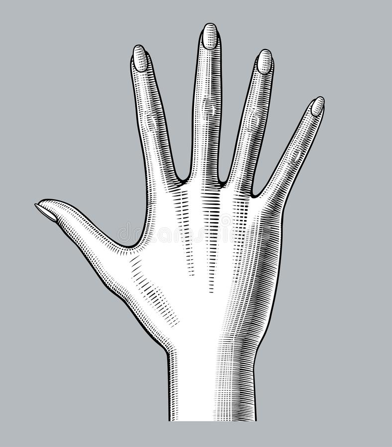 A palma largamente aberta da mão do ` s da mulher espalhou para baixo os cinco dedos ilustração royalty free