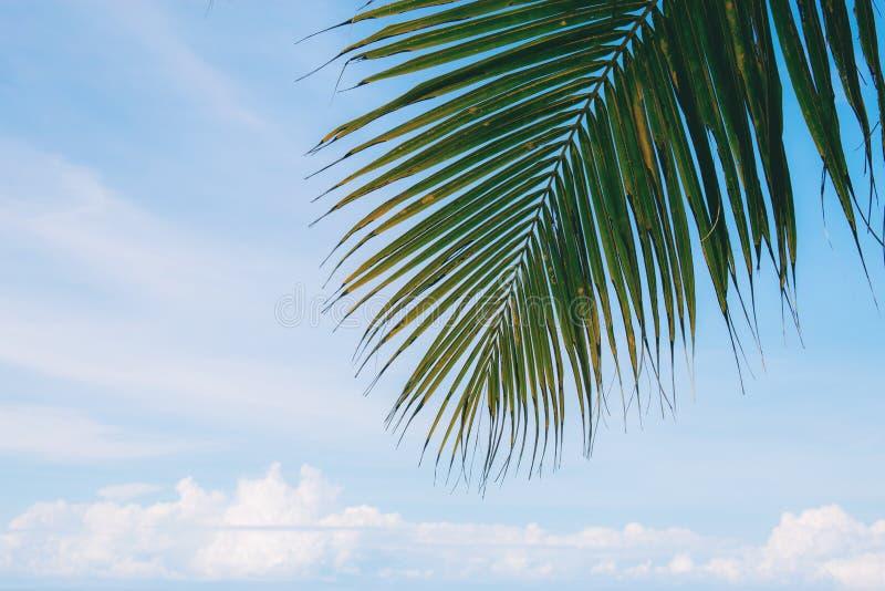 Palma liście przy niebem zdjęcie stock