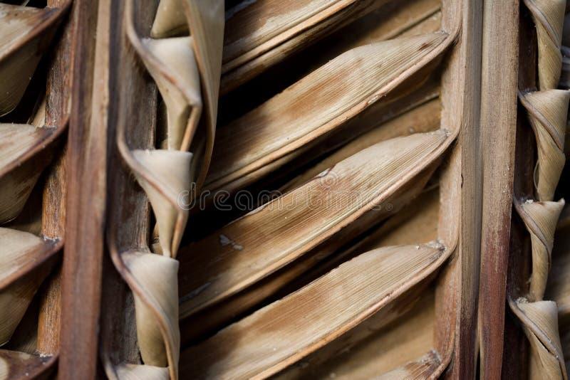 palma liści zdjęcie stock