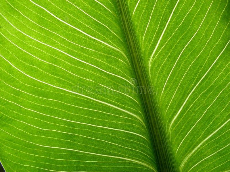 palma liści, obrazy royalty free