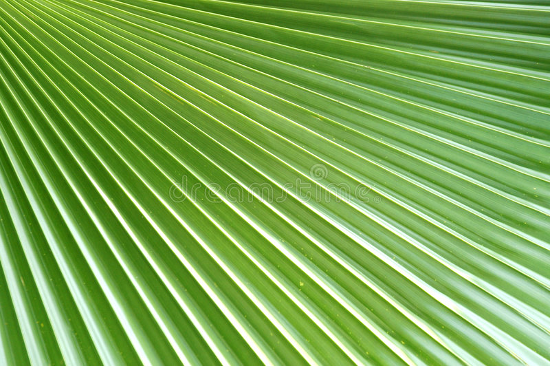 palma liści projektu fotografia stock