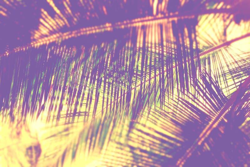 Palma liście - Abstrakcjonistyczny Naturalny tło z plamą zdjęcia stock
