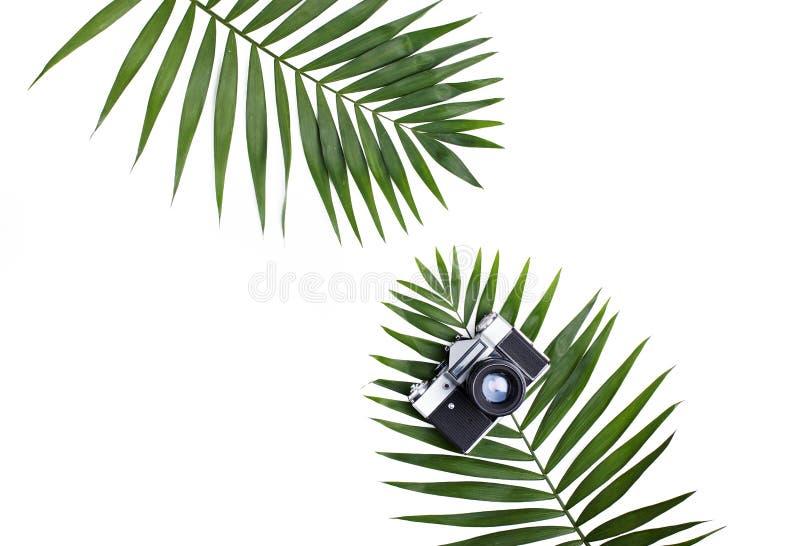 Palma liście i stara fotografii kamera na bielu obrazy stock