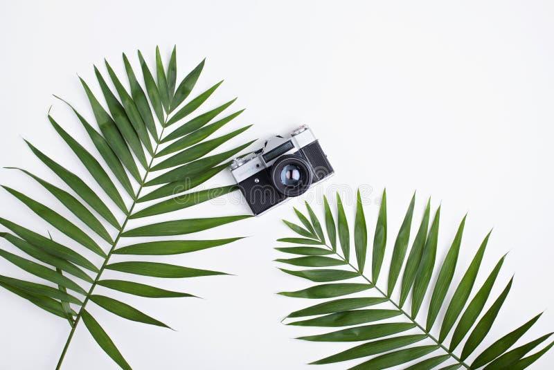 Palma liście i stara fotografii kamera na bielu obraz stock