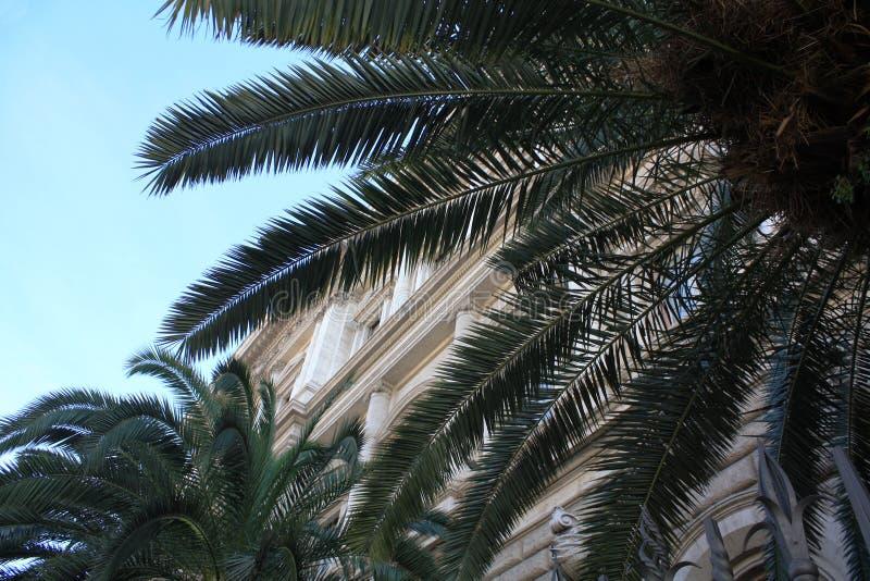 Palma liście na nieba tle obrazy stock