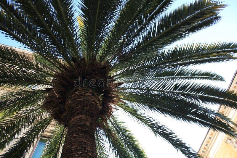 Palma liście na nieba tle obraz stock
