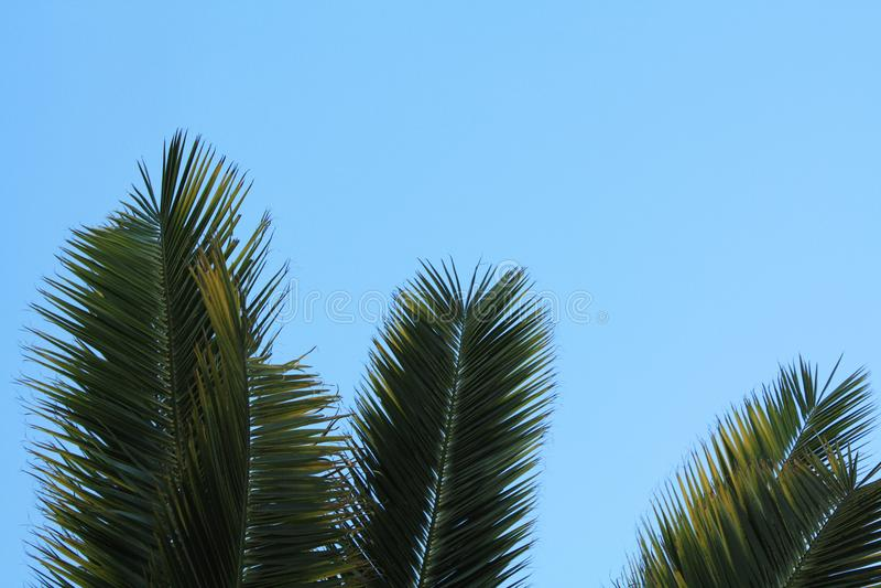 Palma liście na nieba tle zdjęcia royalty free