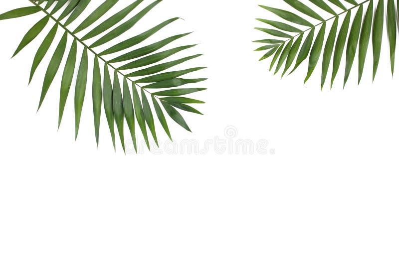 Palma liście odizolowywający na białym tle zdjęcia royalty free