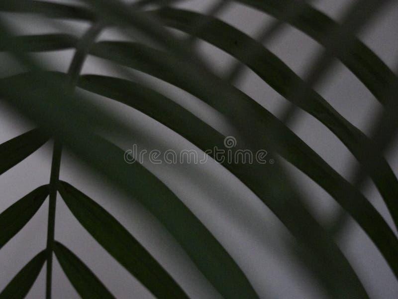 Palma liście w plamie obraz royalty free