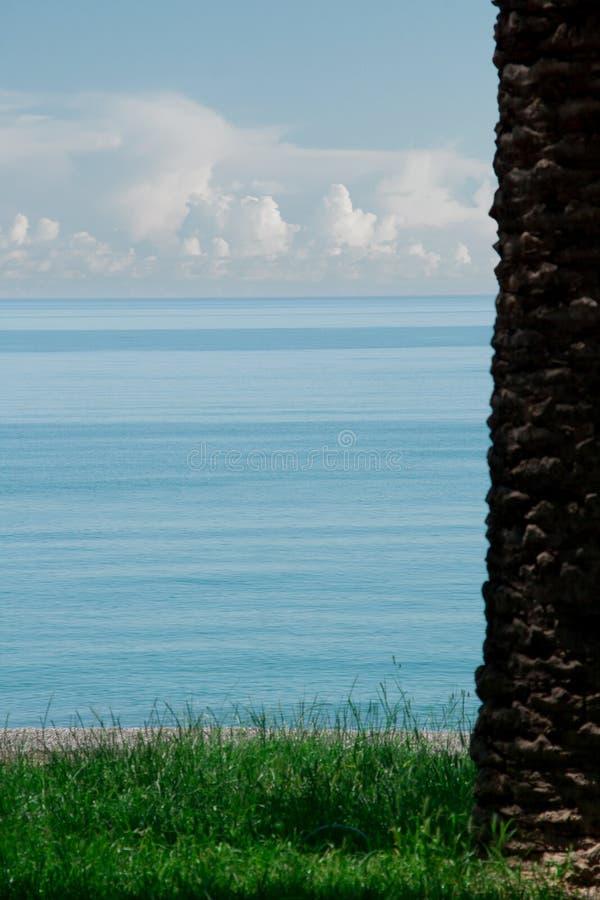Palma na grama e no mar imagem de stock royalty free