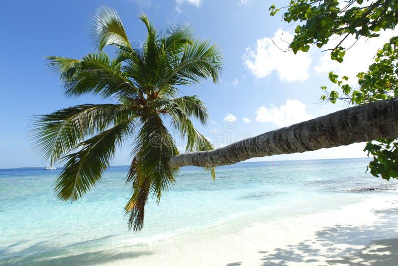 Palma na plażowym i dennym tle zdjęcia stock