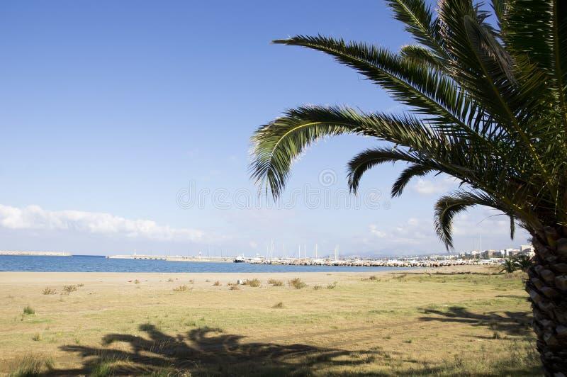 Palma na plaży zdjęcia stock