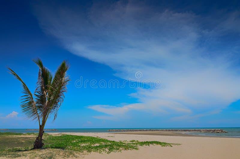 Palma na plaży, Dominikański republicbeach w Phetchaburi Tajlandia obrazy royalty free