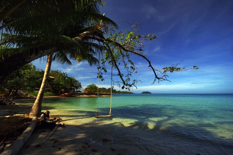Palma na praia fotografia de stock royalty free