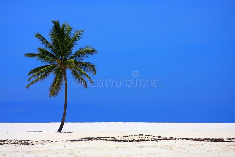 Palma na praia imagem de stock
