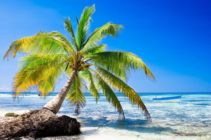 Palma na praia branca da areia perto do oceano ciano imagens de stock