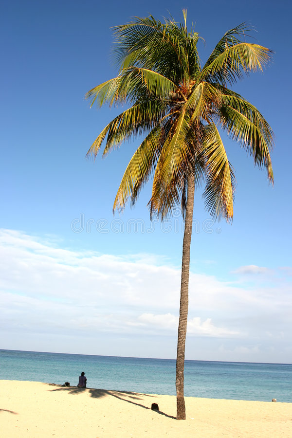 Palma na praia cubana fotos de stock royalty free