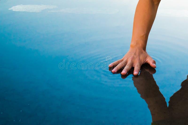 Palma na superfície da água fotos de stock royalty free