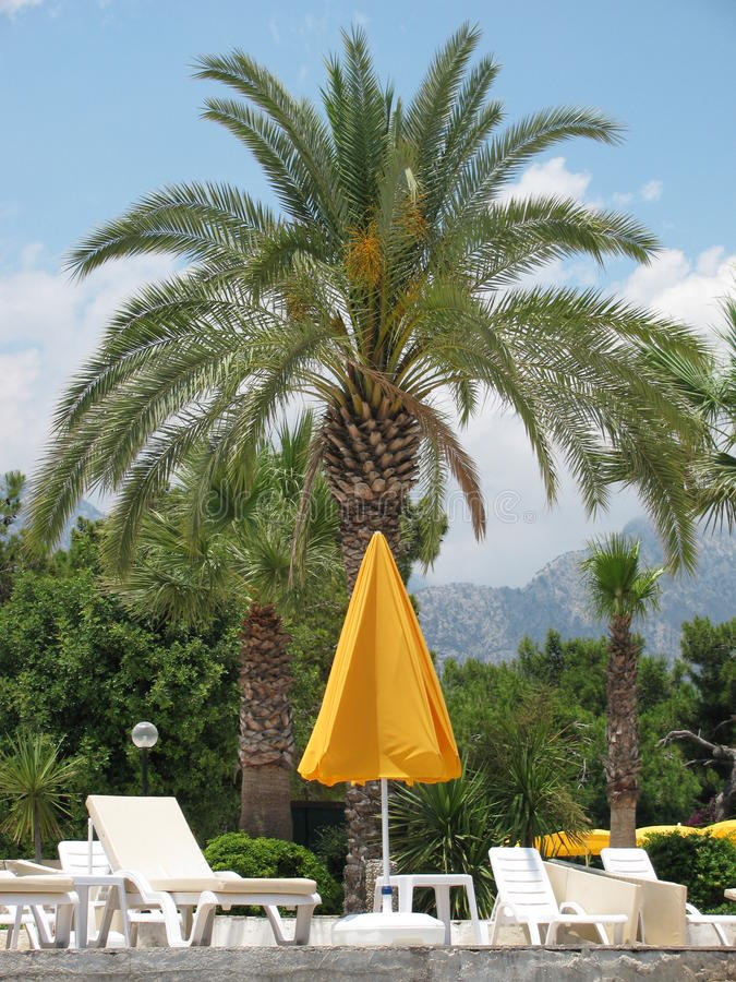 Palma na zona do recurso imagem de stock royalty free