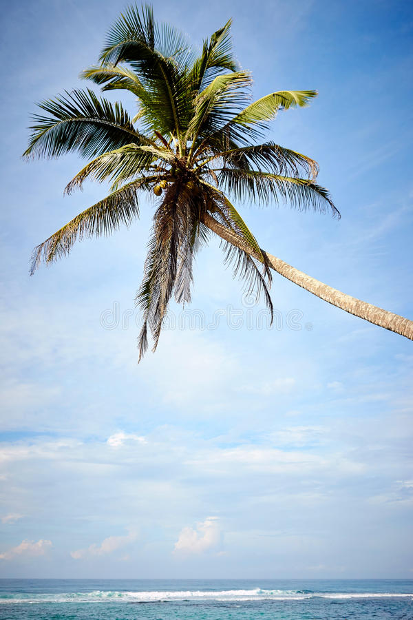 Palma nad oceanem obraz royalty free