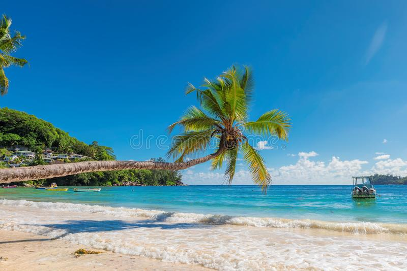 Palma nad piękną Jamajka plażą fotografia royalty free