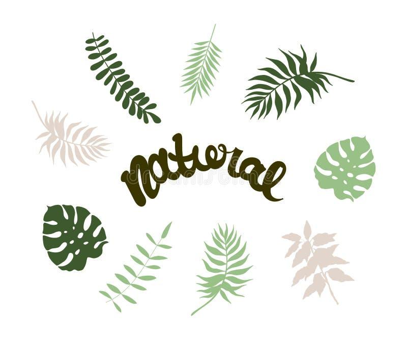 Palma natural ilustración del vector