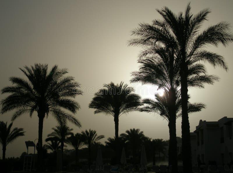 Palma nel tramonto fotografia stock libera da diritti