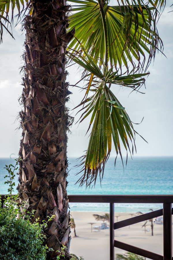 Palma no Praia de Chaves imagem de stock