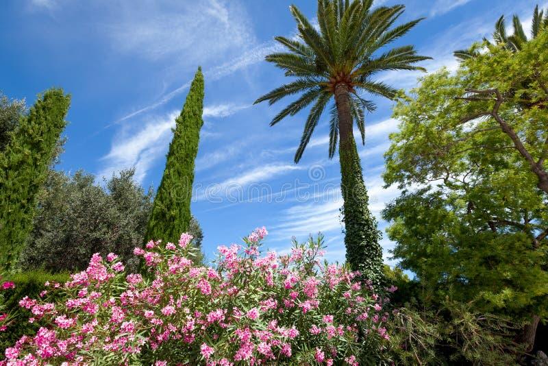 Palma och buskar med färgrika blommor arkivbilder