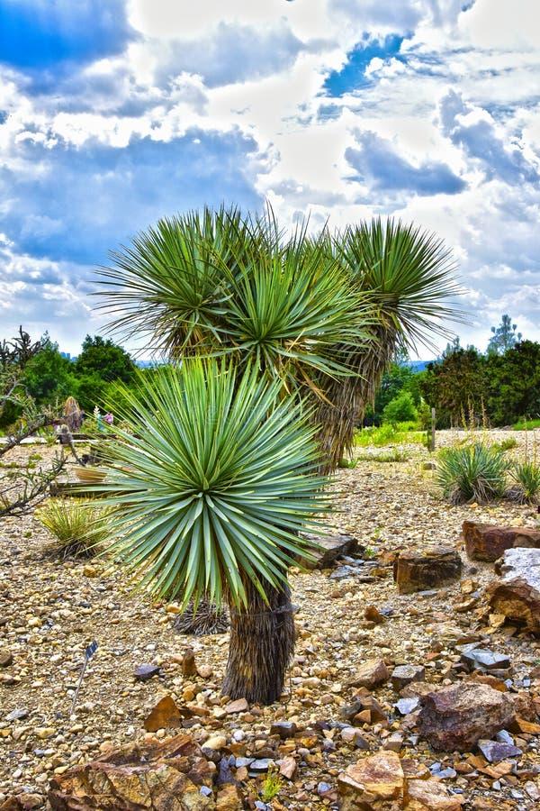 Palma od ogródu botanicznego obraz stock