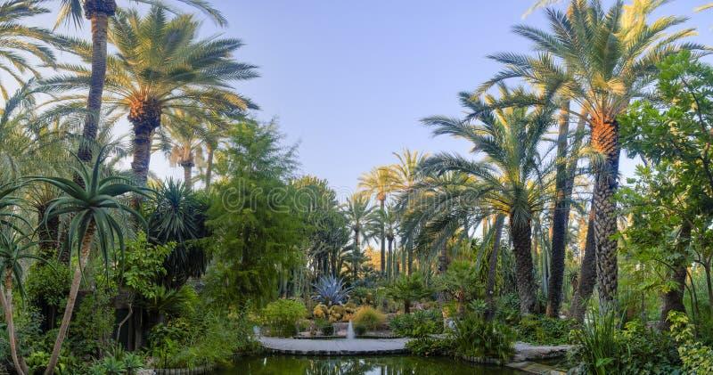 Palma ogrodowy Elche Hiszpania obrazy royalty free