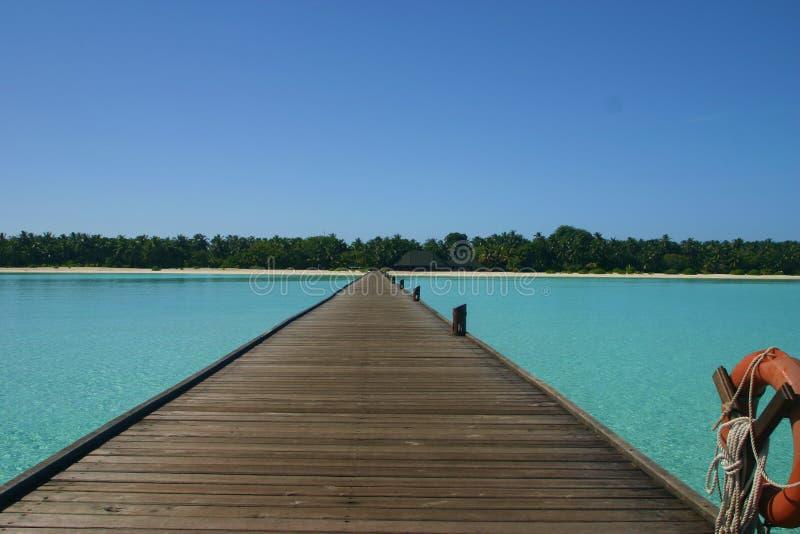 Palma Palme de la isla de Maledives fotos de archivo