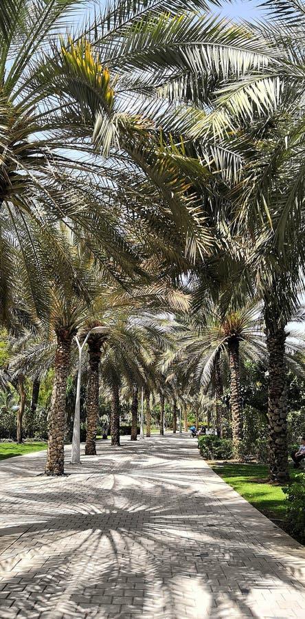 Palma park w Dubaj fotografia stock