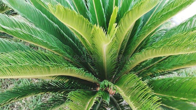 Palma piacevole dell'albero fotografie stock