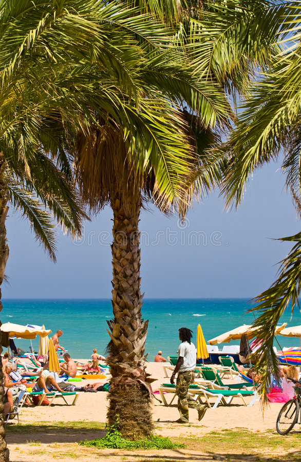 palma plażowa obrazy stock