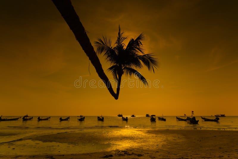 Palma przy zmierzchem, Koh Tao wyspa obrazy stock