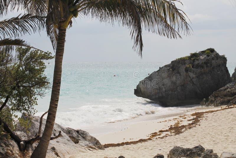 Palma, roccia, sabbia e mare in Tulum, Messico fotografia stock libera da diritti