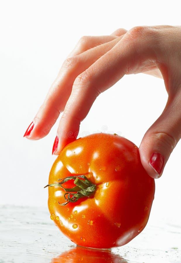 Palma roja del tomate fotografía de archivo