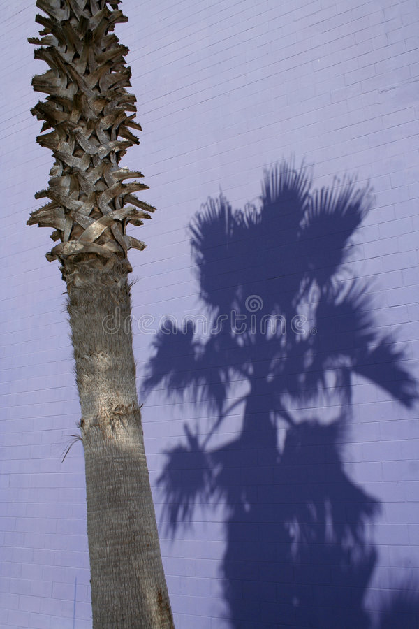 Download Palma roxa imagem de stock. Imagem de tijolo, palma, silhueta - 539443