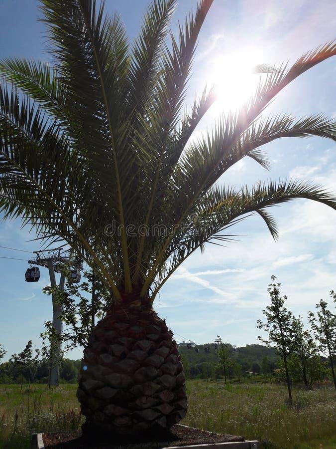 Palma słońce zdjęcia royalty free