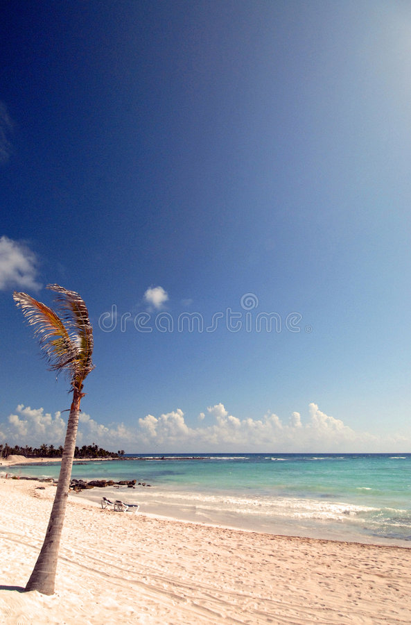 Palma solitária fotografia de stock
