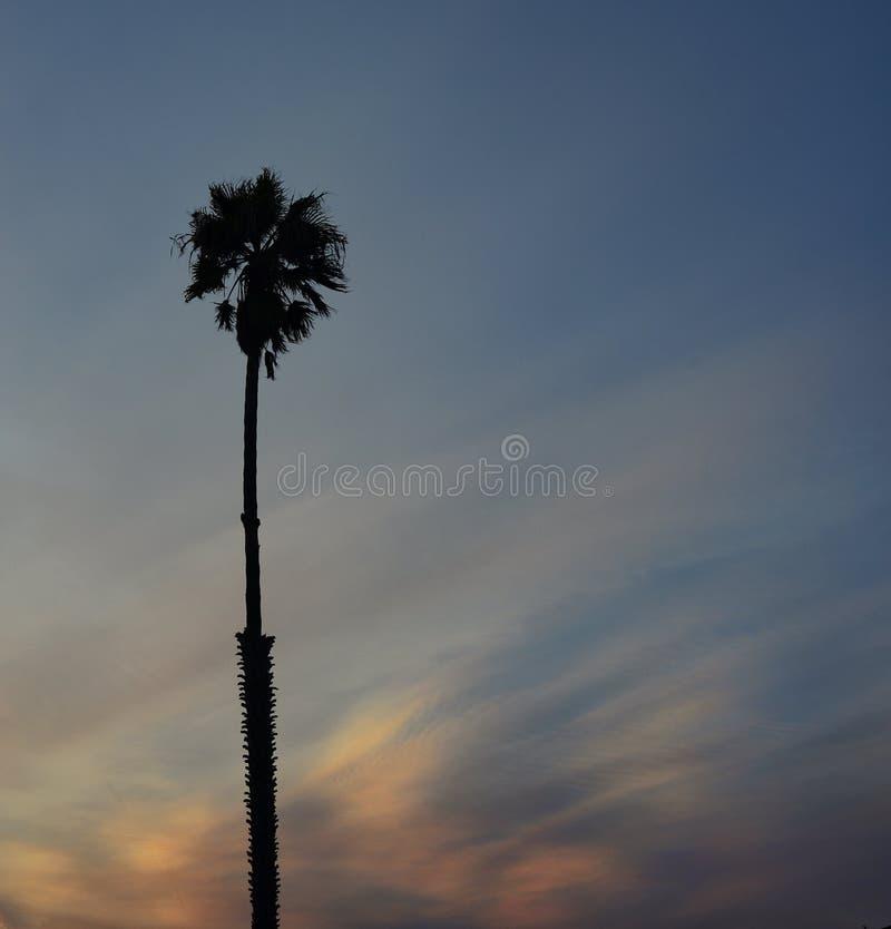 Palma solitaria en la puesta del sol fotografía de archivo libre de regalías