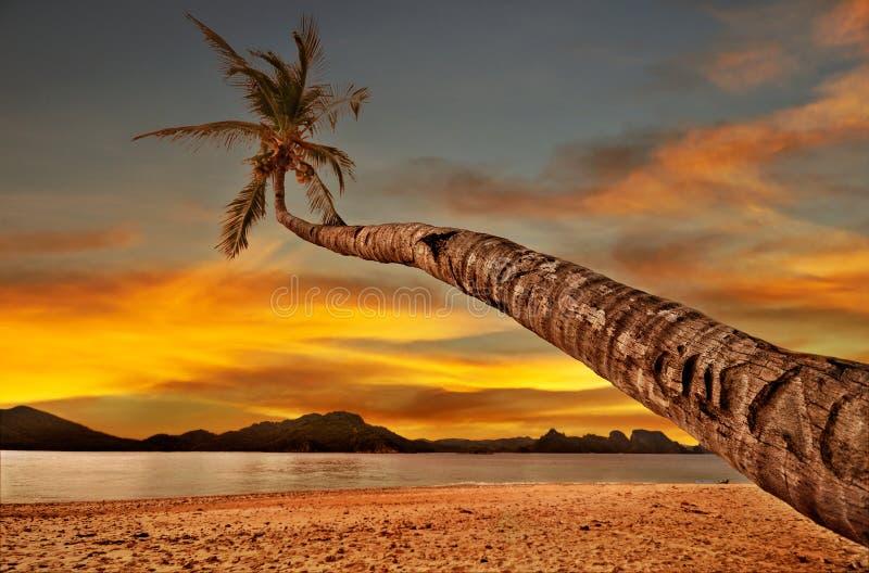 Palma sopra il mare di tramonto fotografie stock libere da diritti