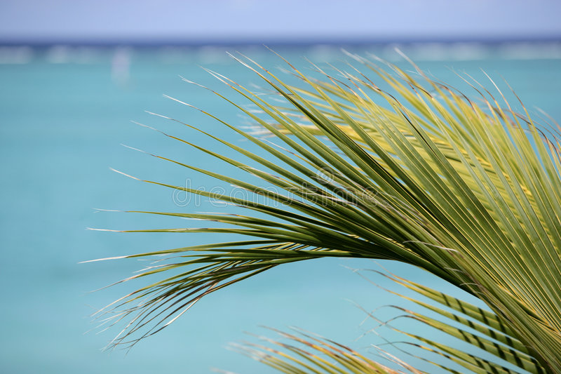 Palma su una priorità bassa dell'acqua del turchese immagine stock