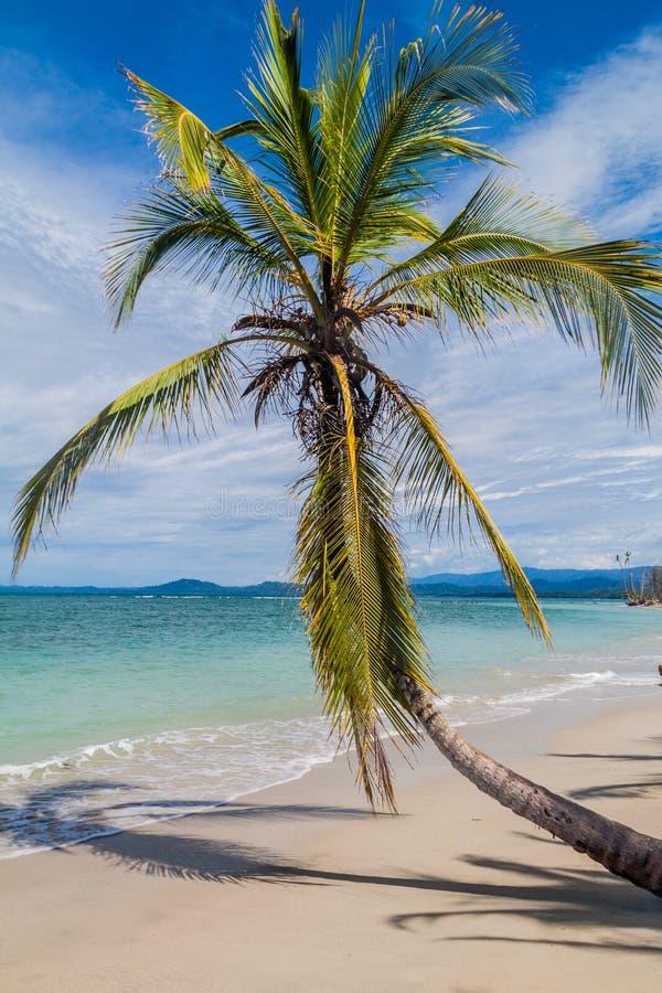 Palma su una spiaggia nel parco nazionale di Cahuita, Costa Ri fotografia stock libera da diritti