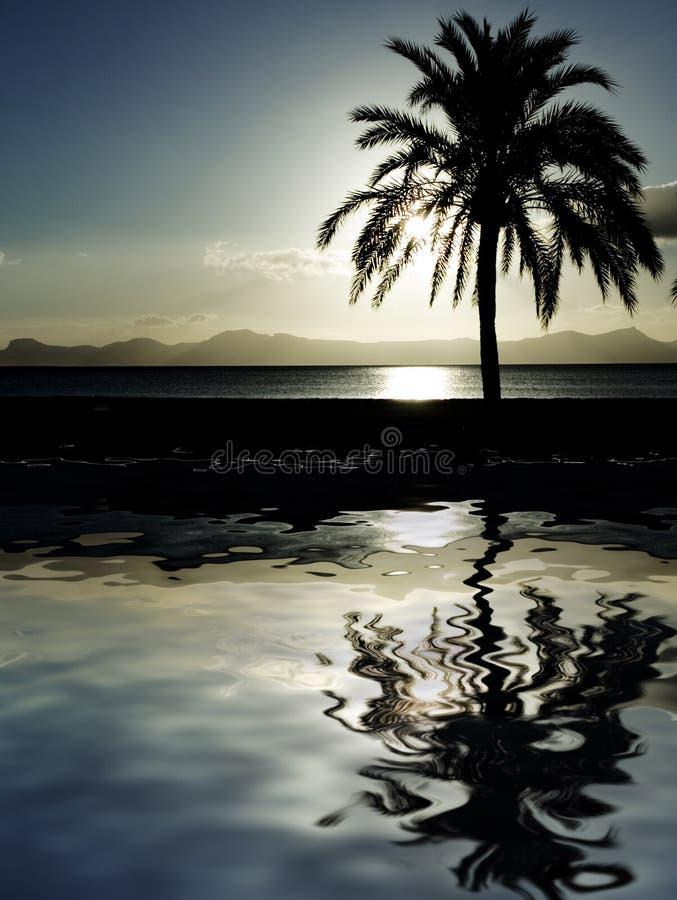 Palma sulla spiaggia al crepuscolo fotografia stock libera da diritti