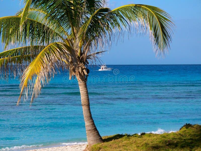 Palma sulla spiaggia con la barca fotografia stock