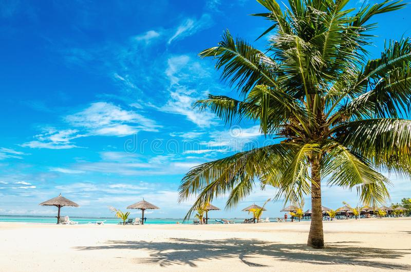 Palma sulla spiaggia sabbiosa con l'ombrello della palma fotografia stock